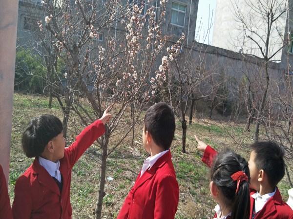 瞧,桃树开花了,真漂亮