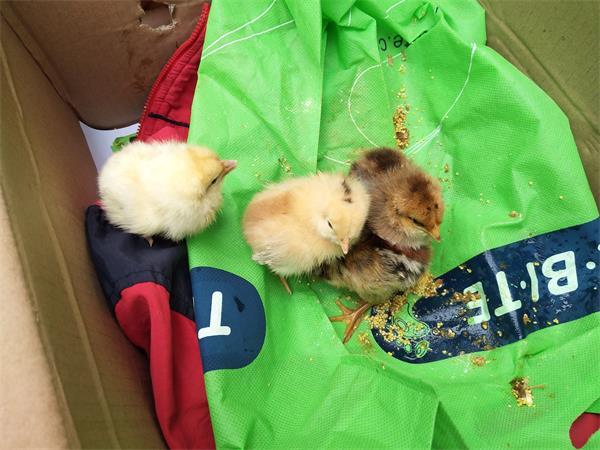 让他们近距离观察小动物,同心幼儿园本学期开辟了自然角——同心养殖